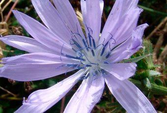Flores-de-Bach aplicadas a la podologia psoriasis