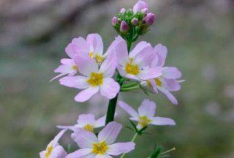 Flores de Bach y Sarcoma de Kaposi