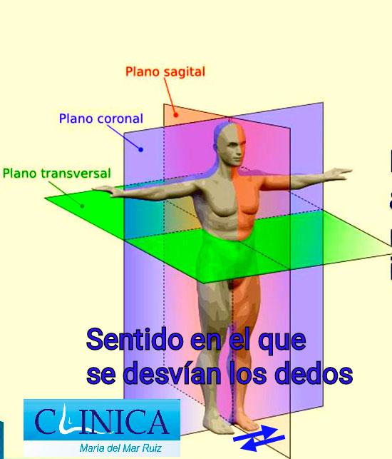 Plano anatómico en el que se desvían los dedos supra e infraductos