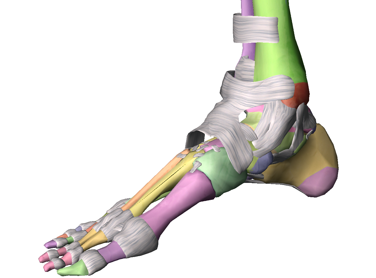 lesiones tobillo y pie clínica podológica M Mar Ruiz